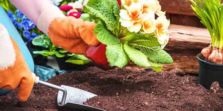 gardening is good