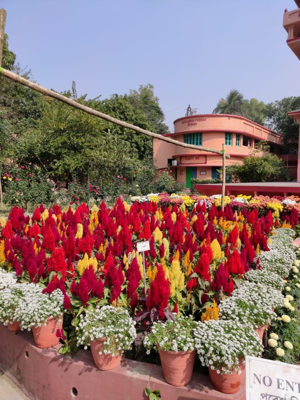 Blooming beauty at Nimpith