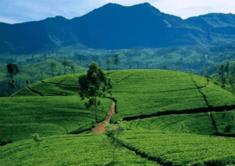 Srilanka Tour Package