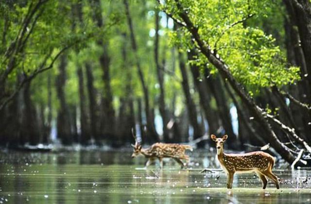 Sundarban Jungle